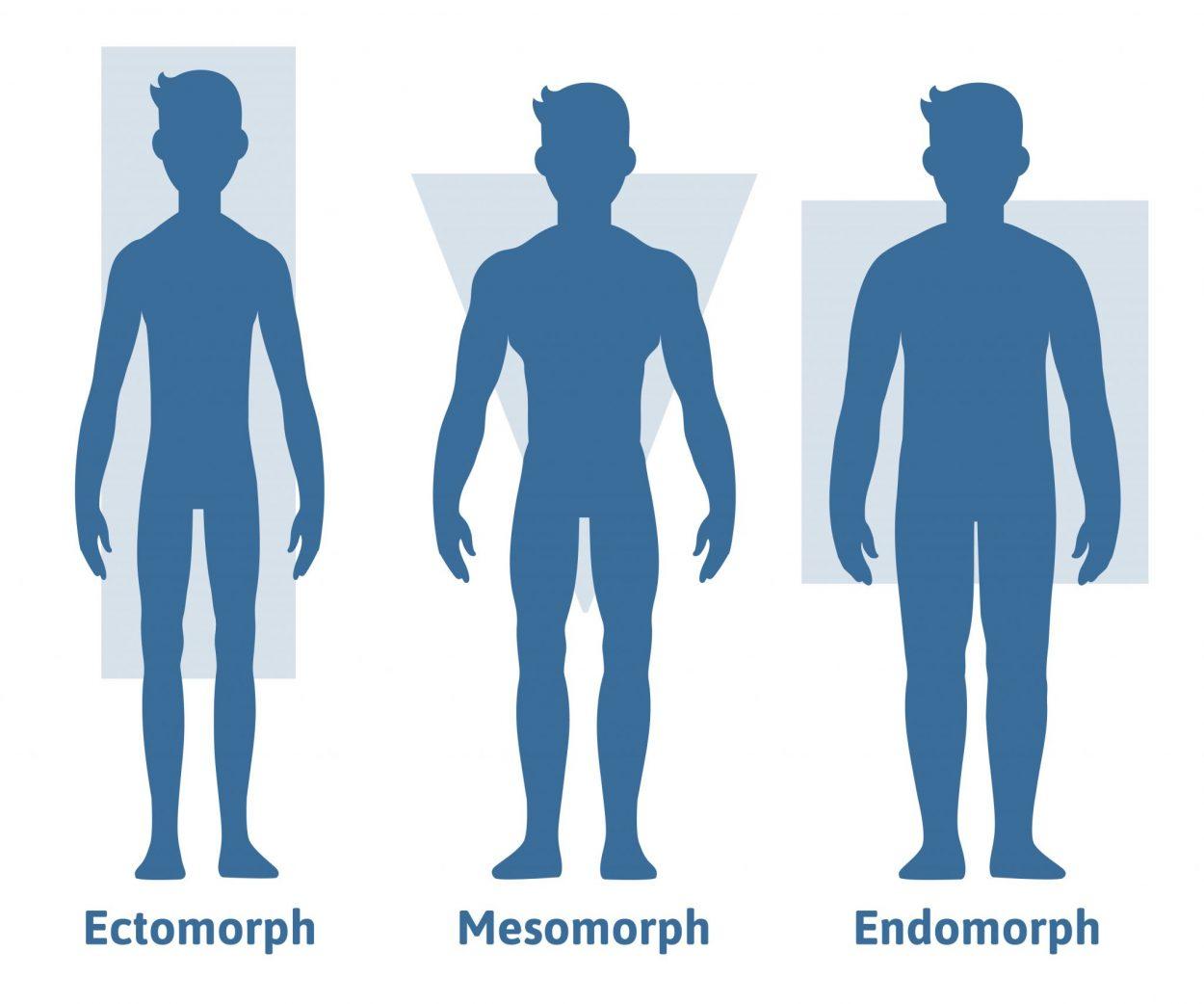What Body Type am I - Mesomorph, Endomorph or Ectomorph?