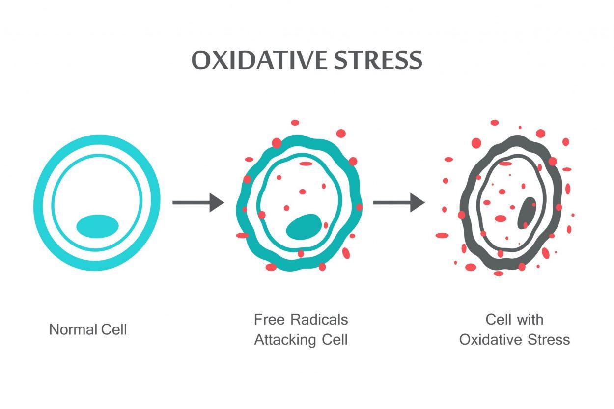 Oxidative Stress | Fitness Savvy