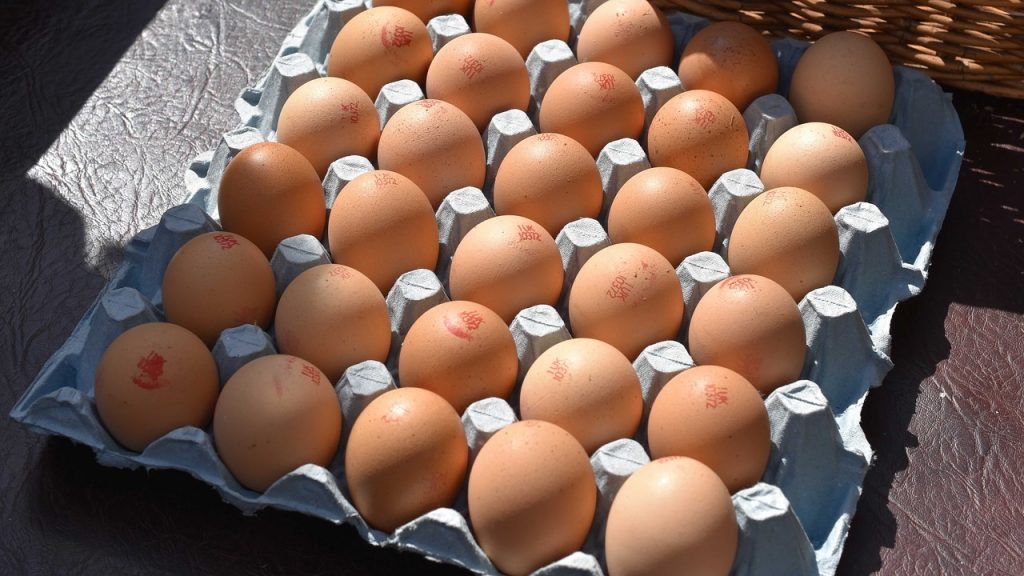 eggs are rich in protein